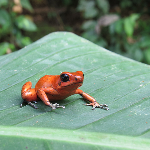Animals you can see in Costa Rica