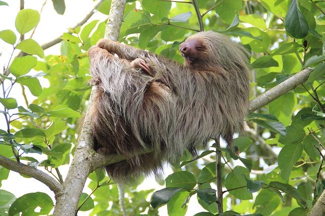 sloth-1041855_640