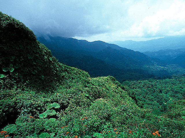 Monteverde Reserve
